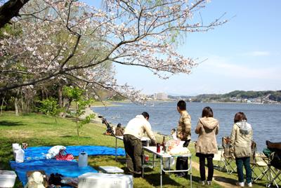 佐鳴湖でお花見