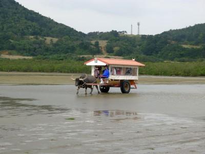 水牛車で由布島へ