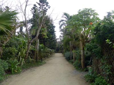 熱帯性の植物